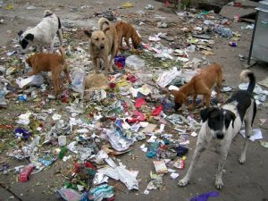 dogs-and-trash