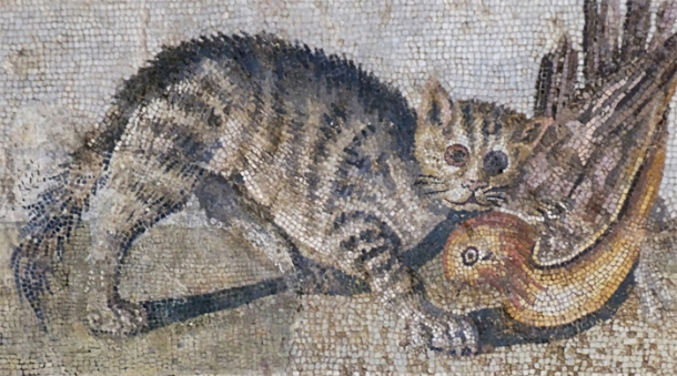 A mosaic of a cat in Pompeii. (Source) http://commons.wikimedia.org/wiki/File:Mosaic_cat_ducks_Massimo_Inv124137.jpg